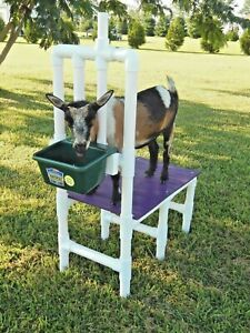 New Goat Milking Stand Nigerian Dwarf Milk Hoof Trimming Only 25 Lbs Free Ship