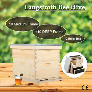 Essentials Complete 20 Frames Double Level Bee Hive Starter Kit Start Beekeeping