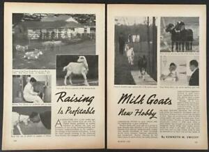 raising Milk Goats A Profitable New Hobby 1939 American Goat Society Pictorial