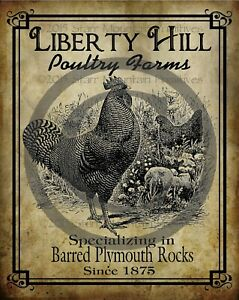 Primitive Country Liberty Hill Poultry Farms Chicken Rooster Laser Print 8x10