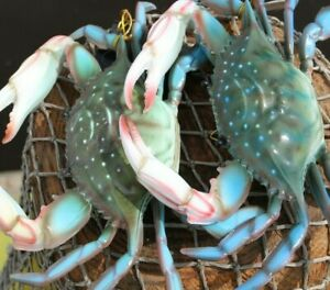 Seafood Restaurant Decor Large Blue Crab Replicas Ultra realistic 9 To 10 Inch