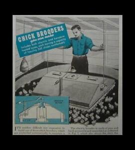 Chick Brooder 1944 Howto Build Plans Poultry Chicken 200 Capacity