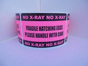 250 Fragile Hatching Eggs Handle With Care No X ray 2x3 Sticker Label Fluor Pink