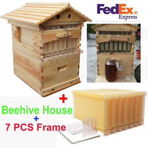 1 X Wooden Beehive 7 X Automatic The Bee Hive Frames Raw Honey Beekeeping