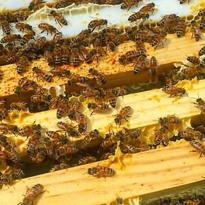 Adopt A Queen Honeybee And Help Us Help Bees On Our Bee Preserve sponsor A Hive