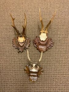 3 Dated Black Forest Antlers On Wooden Antique Plaques Taxidermy 1955