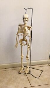 33 Inch Medical Anatomical Skeleton Model Nice Quality With Stand
