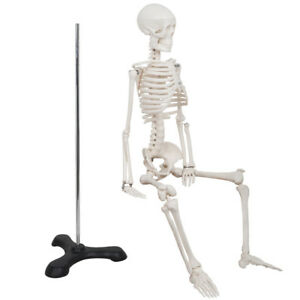 New 85cm Human Anatomical Anatomy Skeleton Medical Model Stand