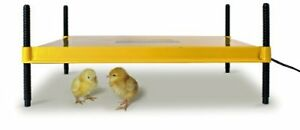 Brooder For Warming Newly Hatched Chicks And Ducklings