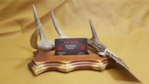 Real Whitetail Deer Antler Desk Top Business Card Holder