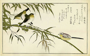Large Utamaro Japanese Woodblock Print Tit And Japanese White Eye