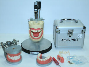 Lot Of Modupro Typodont Carrier Trays W Teeth Dentsply Base Case Extra Teeth