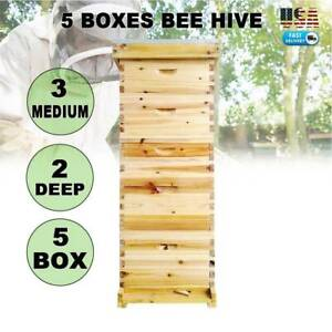 10 frame Size Beehive Frames Bee Hive Frame Bee House For Beekeeping 5 Boxes New