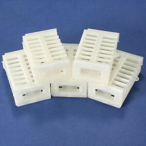 10pcs Functional Queen Cage Bee Match box Moving Catcher Cage Beekeeping Y Bs