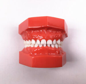 Dental Children First Teeth Model Full Denture Milk Tooth Brush Study