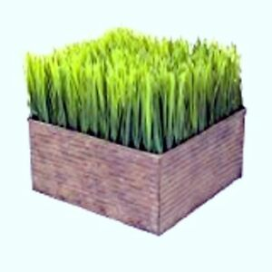 2 pack Botanicals Faux Wheatgrass Display Square Potted Plastic 8 X 8 X 7 5 tag