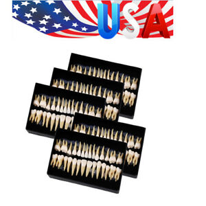 Usa 5 Kit Dental Permanent Teeth Demonstration Teach Study Model 1 1 7008
