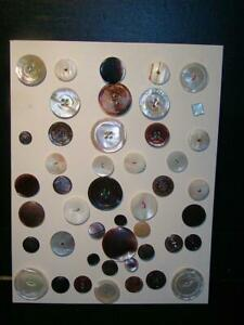 Antique Buttons All Mother Of Pearl M O P Buttons 46 In All Carded