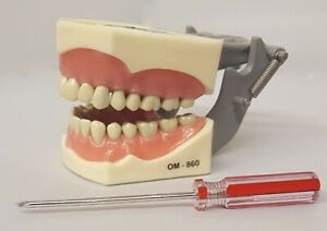 Typodont Dental Model 860 Works With Columbia Brand Teeth