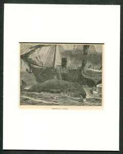 1887 Antique Print Of A Whale Ship Whaling Right Whale