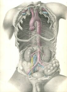 1870 Antique Medical Print Of Human Anatomy From Surgical Anatomy By Maclise D