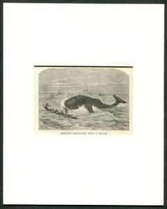 1887 Antique Print Of A Whale Ship Whaling Sperm Whale