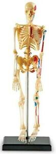 Learning Resources Skeleton Model Miniature Model Easy To Manipulate 41 piece