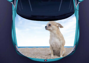 Dogs Chihuahua Full Color Sticker Car Hood Vinyl Graphics Decal Wrap Pn295