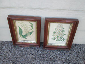 55607 Pair Of Antique Floral Botanical Prints In Walnut Victorian Frame S