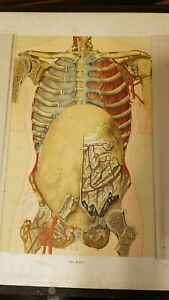 Eckel S Anatomical Aid For The Practical Embalmer C 1903 Die Cut Medical Book