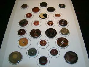 Vintage Antique Buttons 24 Buttons Mix Comp And Vegetable Ivory Carded