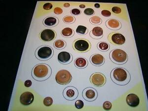 Vintage Antique Buttons 38 Vegetable Ivory Buttons Carded In 1990 Nice Lot
