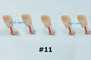 11 Dental Root Canal Practice Pulp Cavity Clear Resin Teeth Model Teaching Tool