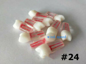 10 dental Resin Root Canal Teeth Study Practice Model Endodontic Pulp Files 24