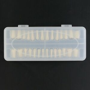 Set Of 28 Dental Typodont Teeth Permanent Replacement Nissin Kilgore 200 Fit