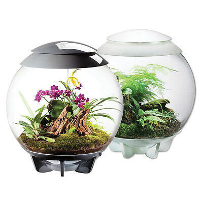 New! Biorbair By Oase - Fully Automated Terrarium For Tropical Plants - White