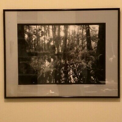 Signed, Numbered And Framed Clyde Butcher Loxahatchee 5 Black & White Art 1991