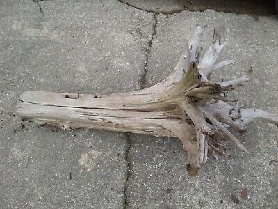 "Large 36"" X 60+"" Driftwood Freshwater Natural Decorative Large Bird/reptile Cage"