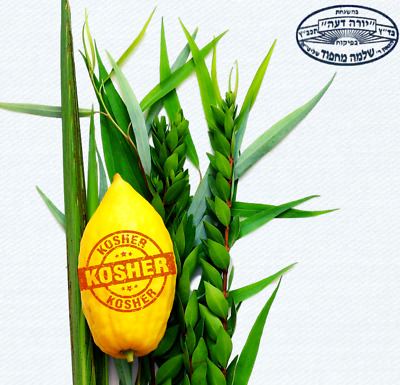 Ethrog Citron From Israel After Sukkot, A Virtue Of Any Things Fast Ship