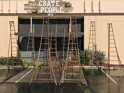 Vintage Orchard Ladders   --  Over 50 Available -- Barn Find!