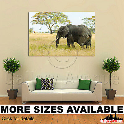 Wall Art Canvas Picture Print - Elephant Walking Through Grass 3.2