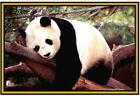 Panda Photographs  - New - Fridge magnets - .