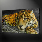 LEOPARD PAINTING STYLE CANVAS WALL ART PICTURES PRINTS