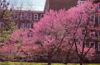 20 Eastern Redbud Tree seeds (Cercis canadensis)Ornamental Showy CombSH M25