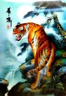 Tiger Horse Dolphin Polar Bear 3D Effect Window Picture Wall Art Prints