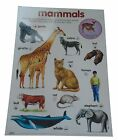 Early Learning Children's Laminated Poster/Charts Sets