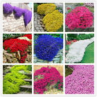 100 pcs/bag Creeping Thyme Seeds or Multi-color ROCK CRESS Seeds - Perennial