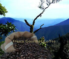 Jamaican Blue Mountain Gold Cup 100% Arabica Beans/Ground Speciality Coffee