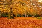 Autumn Colours in the Park, Leaves, Trees, Forest, Canvas Picture Wall Art