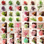 US Artificial Succulent Flower Mini Faux Potted Plants Foliage DIY Garden Decors